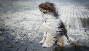 Увага‼️ Синоптики попереджають про сильний вітер