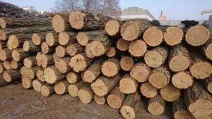 Відбулися зміни щодо порядку відпуску дров для населення