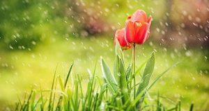 Завтра на Сумщині обіцяють дощ